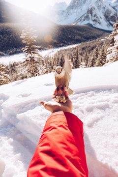 Person feeding little bird in snow