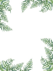 fern frame/ Watercolor floral frame. Hand drawn spring plants card design: botanical elements isolated on white background. Branches fern.