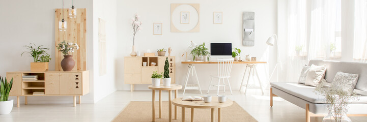 Fototapeta Real photo of white open space flat interior with grey sofa, wooden cupboards with plants and decor, coffee table with mugs and study corner desk with empty screen computer obraz