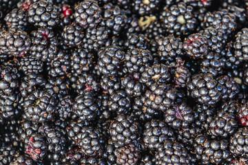 close up blackberries on market stall in bulk
