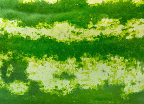 Green striped texture of the watermelon