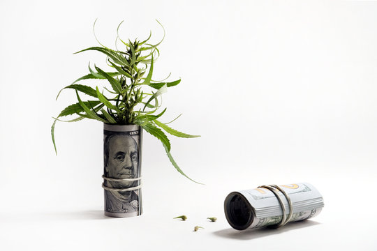 The concept of drug trafficking or legalization. The top of the cannabis sticks out of a hundred-dollar bill folded into a tube. Grains of marijuana lie next to the money. Isolated, copy space.