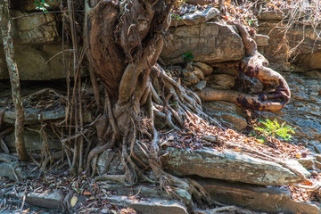 Seedlings and root on the stone.