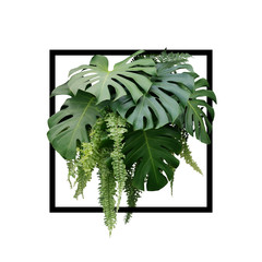 Wall Mural - Tropical foliage plant bush of Monstera and hanging fern green leaves floral arrangment nature backdrop with black frame on white background.