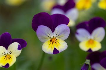 Foto auf Leinwand Blumenhändler Bloemenpracht in de tuin