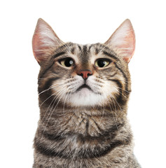 Portrait of cute serious cat on white background