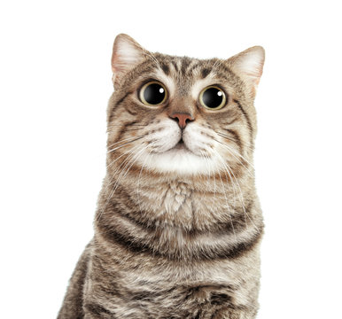 Cute cat on white background. Lovely pet