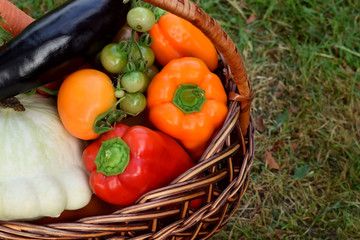 Set of vegetables in a wicker basket. Freshly picked harvest in the green grass