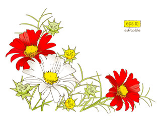 vector colored flowers set. Stylized cartoon drawing isolated on