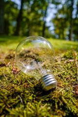 Edison Globe Lightbulb Nature