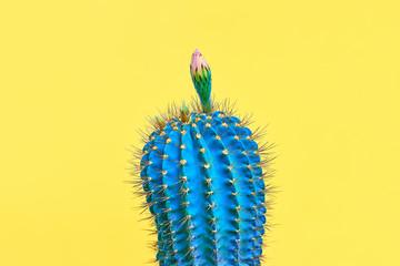 Blue Cactus. Fashion Design. Minimal Stillife. Trendy tropical print on Yellow. Surrealism. Pop Art