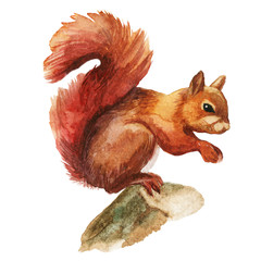 Squirrel isolated on a white background, watercolor.