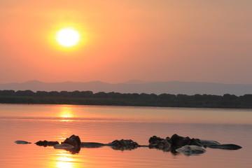 Hippos im Lake George Kasenyi Village Uganda