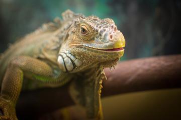 iguana and chameleon are in the aquarium
