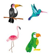 Set of summer exotics birds