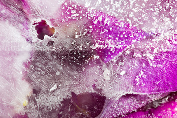 Frozen beautiful pink flower blooms in ice cube