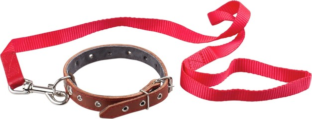 Dog Collar And Leash - Isolated Fotobehang