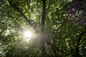 Sole tra le foglie