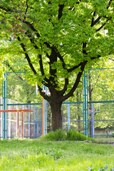 outdoor playground between trees