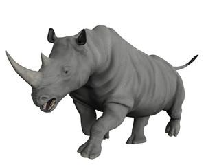 rhinoceros exploring arround