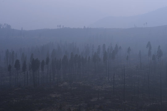 A blanket of fog lays heavily amidst the aftermath of a forest fire