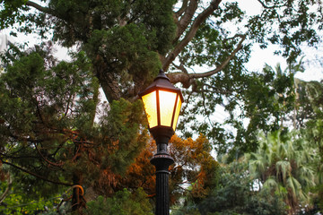 lantern in park in evening, Street lights are installed in park to provide light in the evenings and early morning Fotomurales