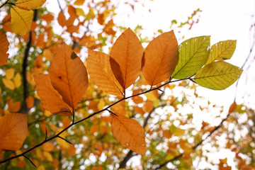 Beautiful tree branch with autumn leaves. Fall background.