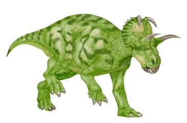 アルバータケラトプス。角竜類。ケラトプス科の恐竜としては近年の作品。カナダの専門家のアドバイスを受け角の長さ等にも反映させた。今後この恐竜を描くつもりはない。イラスト画像完成2007年。体色は自由に設定した。