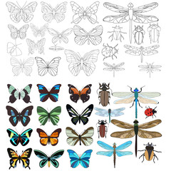 insects, butterflies, beetles, dragonflies, set