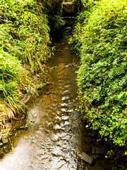 stream cut through dense vegetation