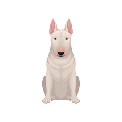 Portrait of sitting bull terrier. Dog with egg-shaped head and short white coat. Human's best friend. Flat vector icon