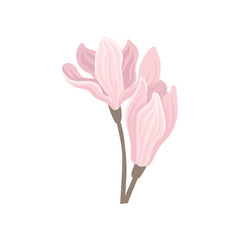 Two gentle pink spring flowers. Beautiful blossoming plant. Flat vector element for poster or invitation card
