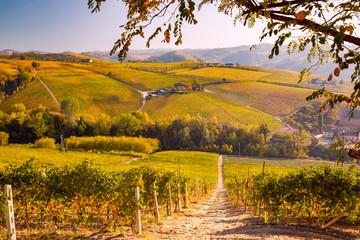 Langhe in Autunno, Piemonte, Italia