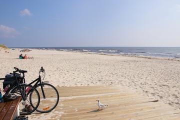 Sandhammaren Beach , Skåne Sweden, seagull, bike