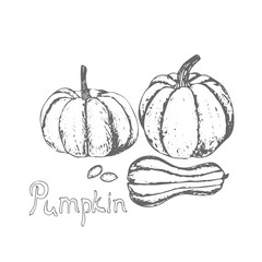 Pumpkin and pumpkin seeds. Hand drawn pumpkin and seed on white background. Farm market product. Vector illustration.