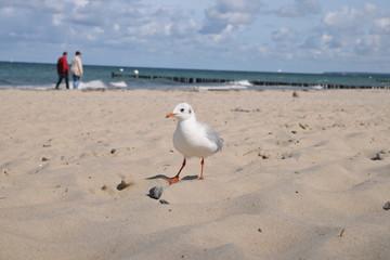 Möwe Seeschwalbe an Nordsee Ostsee Gewässer Sommer himmel Sonne herbst sonnig Strand Sand Plage neugierig schauend