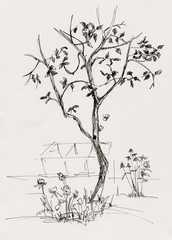 apple tree in garden