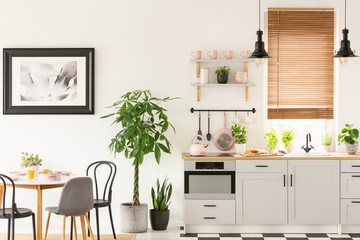 Plants next to chairs and table in grey kitchen interior with pi