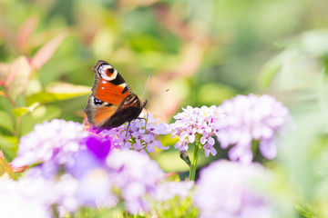 Tenderness and beauty in nature. Beautiful butterfly on a flower