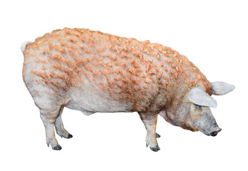 Pig standing full length isolated. Funny fluffy pig close up. Farm animals