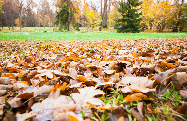 Fallen yellow leaves lay over grass in park