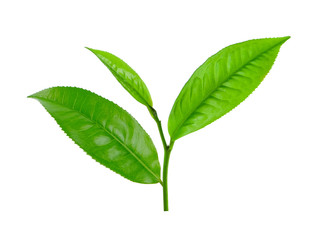 tea leaf isolated on white background Wall mural