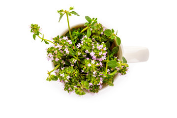 Breckland thyme in cup from above.