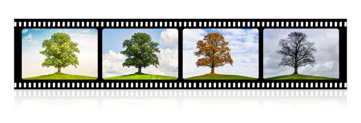 Baum im Wechsel der Jahreszeiten