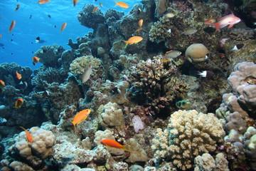 Deurstickers Onder water Korallenblock mit Fahnenbarschen