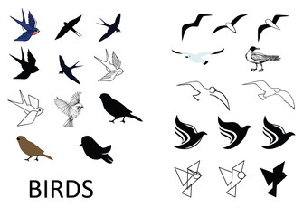 Set of vector birds