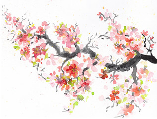 sakura branch with blooming Japanese cherry. watercolor illustration