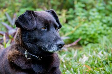 cachorro preto com olhos castanhos na grama verde