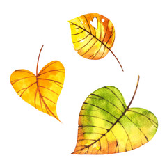 Beautiful colorful autumn leaves isolated on white background. Watercolor illustrations.