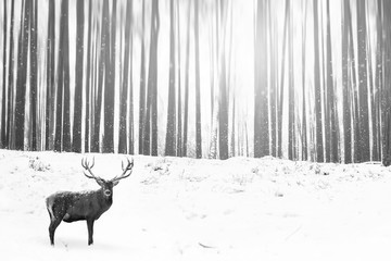 Wall Mural - Noble deer in the background of a winter fairy forest. Snowfall. Winter Christmas creative image. Minimalism concept. Black and white picture.